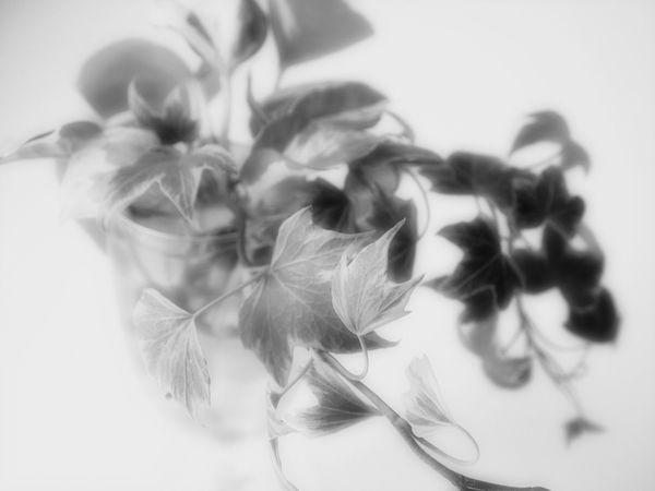 Art Light In The Darkness Beauty In Nature EyeEm Best Shots EyeEm Gallery EyeEm Nature Lover Flower Flower Head Japan Japan Photography Light In The Darkness Plant
