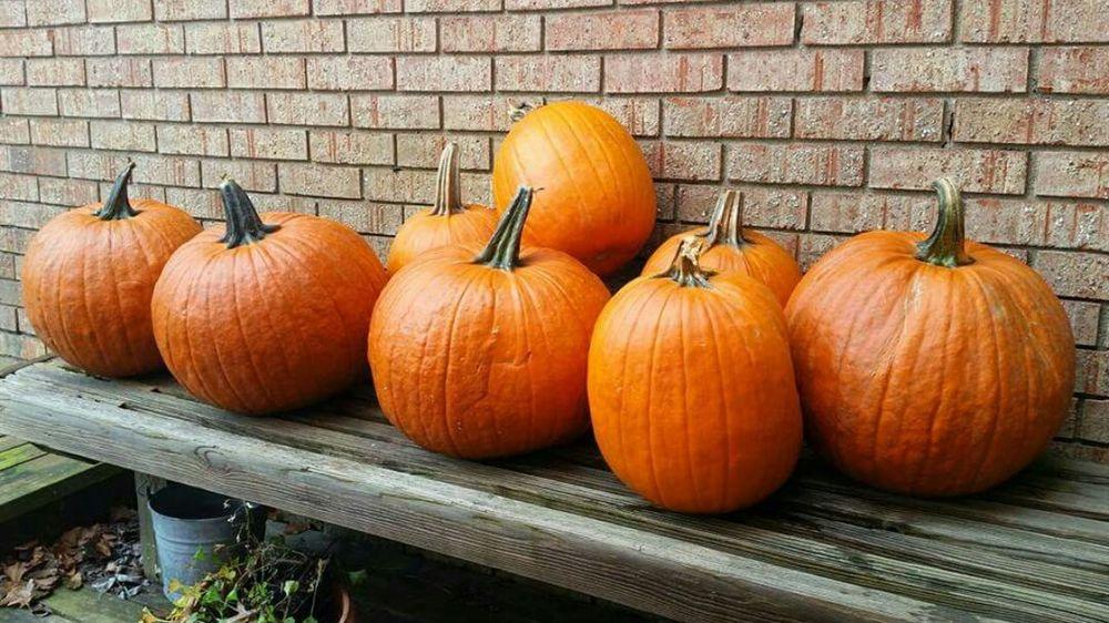 Pumpkins on a bench Pumpkins Fall Fall Season Ohio, USA
