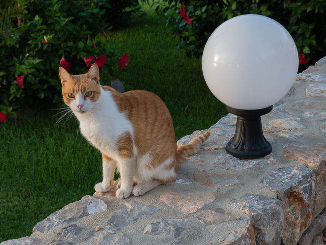 Animal Animal Themes Cat Day Domestic Domestic Animals Domestic Cat Feline Front Or Back Yard Ginger Cat Mammal Nature No People One Animal Pets Plant Rock Rock - Object Sitting Solid Vertebrate Whisker