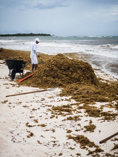 Man Cleaning Moss At Beach Against Sky