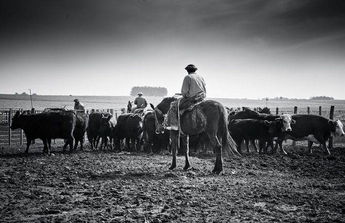 Argentina Photography Blackandwhite Photography Campo Argentino Clear Sky Countryside Gaucho Argentino Gauchos Hombre De Trabajo Horse Man And Horse Non-urban Scene Trabajo De Machos  Trabajo Duro Vidagaucha Working Animal
