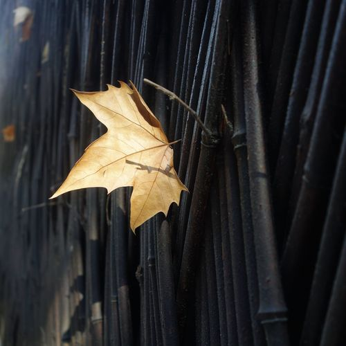 Leaf stuck on wooden fence