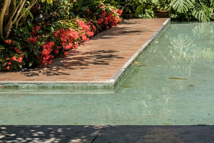 Swimming pool by plants