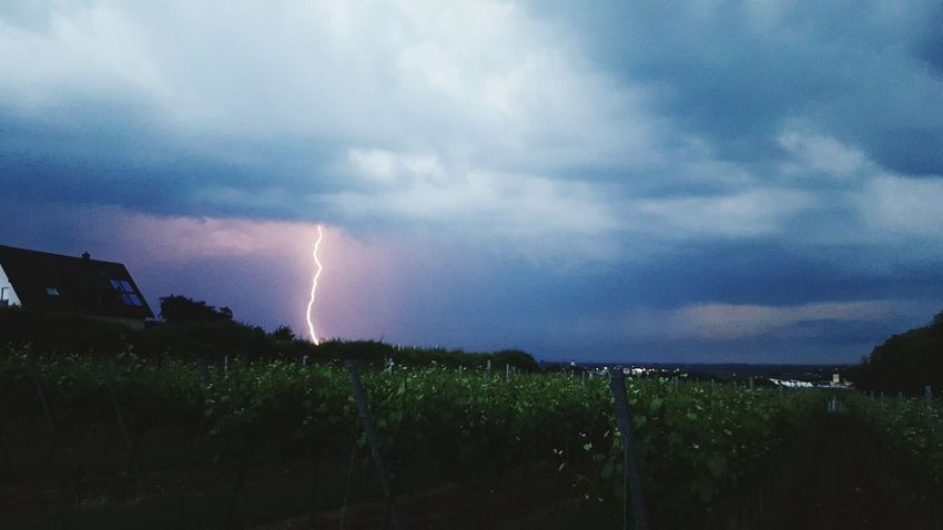 Weather Nature_collection Nature Photography Landscape_photography First Eyeem Photo Taking Photos Samsung Samsungphotography Samsung Galaxy S6 Edge Rheinland-Pfalz  Neustadt An Der Weinstraße WeatherPro: Your Perfect Weather Shot Flash Photography Weather Front The Great Outdoors - 2016 EyeEm Awards The Moment - 2016 Eyeem Awards The Photojournalist - 2016 EyeEm Awards The Photographer