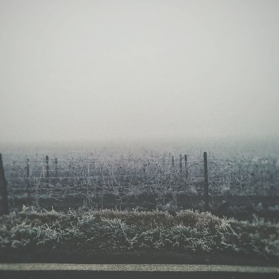 Beauty In Nature Countryside Winter Wintertime Fog Italy Piedmont No People Nature Photography Sunrise