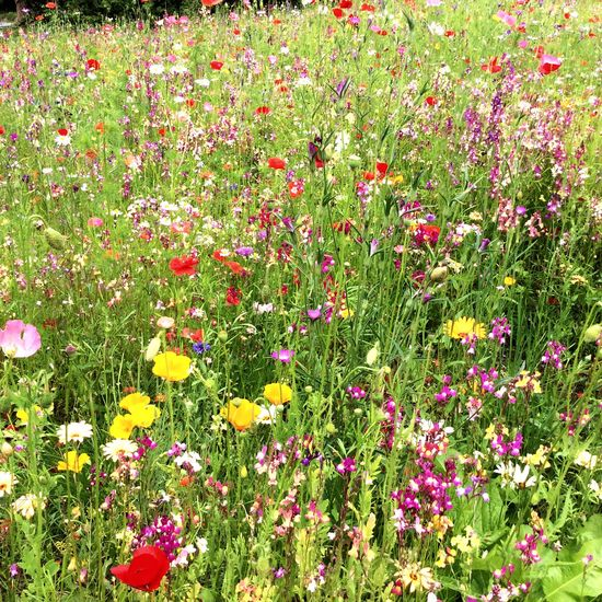 Harlow Carr Gardens wild flower Harrogate Flowers