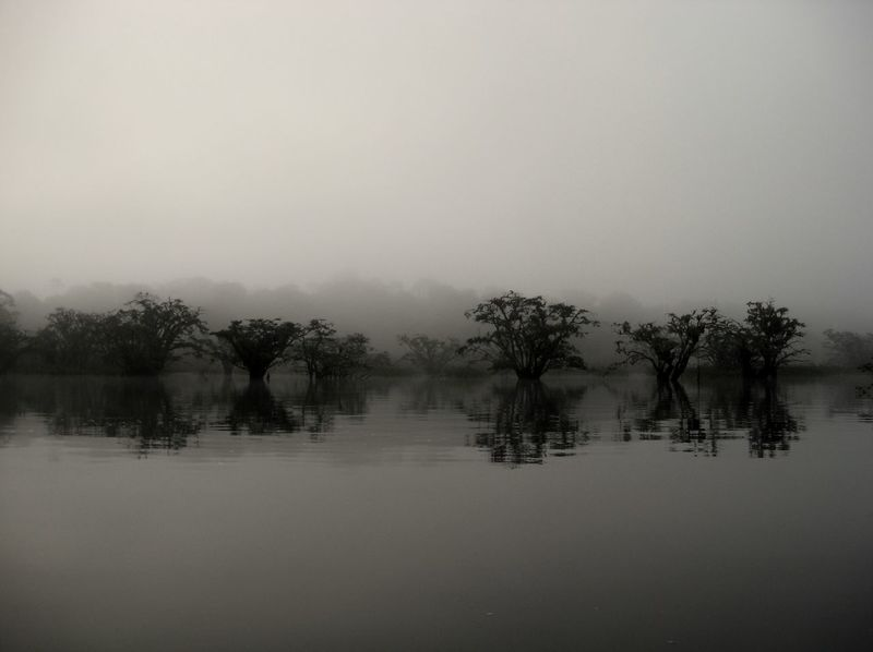 The Amazon River at Dawn Amazon Beauty In Nature Black And White Calm Copy Space Countryside Deep Fog Lake Majestic Non-urban Scene Pensive Reflection Reflection Sad Scenics Serene Solitude Somber Tranquil Scene Tranquility Tree Trees Water Waterfront