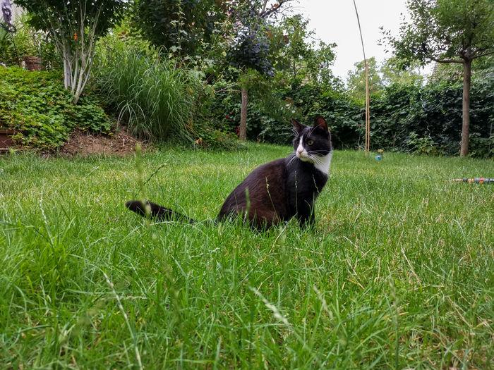Feline Cat
