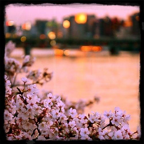 Flower Water Sunset Tree