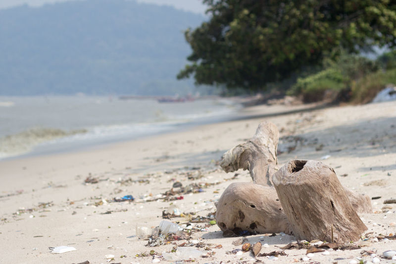 stump on a beach Holiday Trees Animal Animal Themes Animal Wildlife Animals In The Wild Beach Beauty In Nature Day Focus On Foreground Group Of Animals Land Mammal Nature No People No People, Outdoor Outdoors Relaxation Sand Sea Stump Tranquility Vertebrate Water