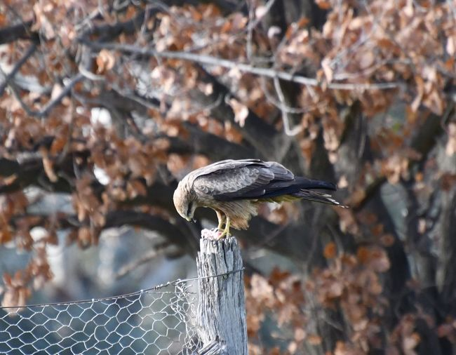 Close-up of bird perching on a fence