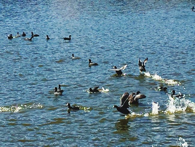Lake Ducks Nofilter Colors Life Nature Photography Eyeemphotography Enjoying Life Animal Photography Eye Em Nature Lover