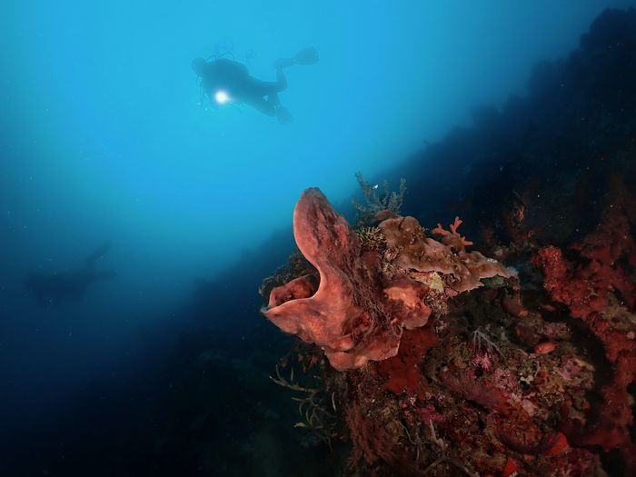 Explore new dive site