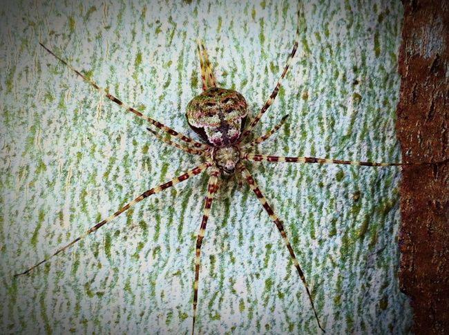 Cauhgt in aParque Natura Arachnid Nature Spider