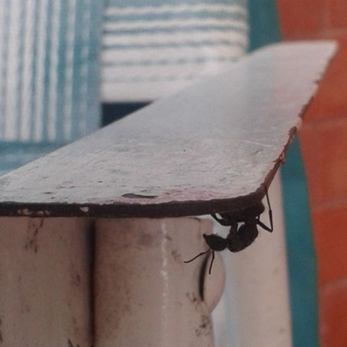 Ant Mylittlefriend Like4like
