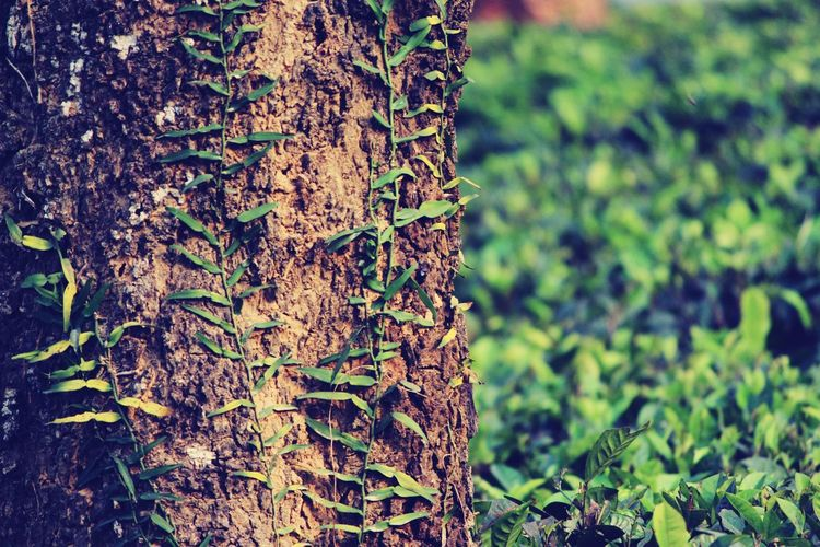 Tree Thick Textured  Close-up Grass Growing Young Plant My Best Travel Photo