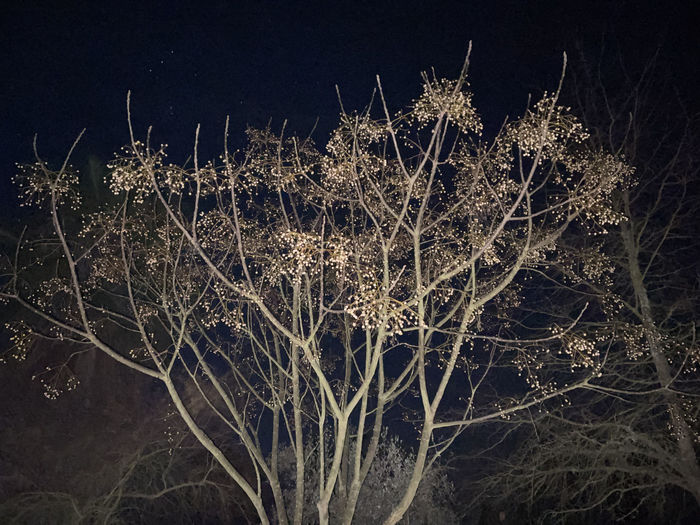 Close-up of plant on field against sky at night