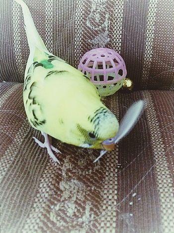 Hello Goodday Mybird I Like It <3 Nice