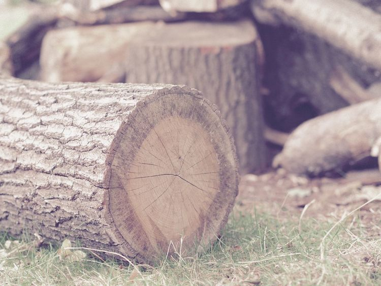 Tree Trunk Log Tree Log Wood Richmond Park, London