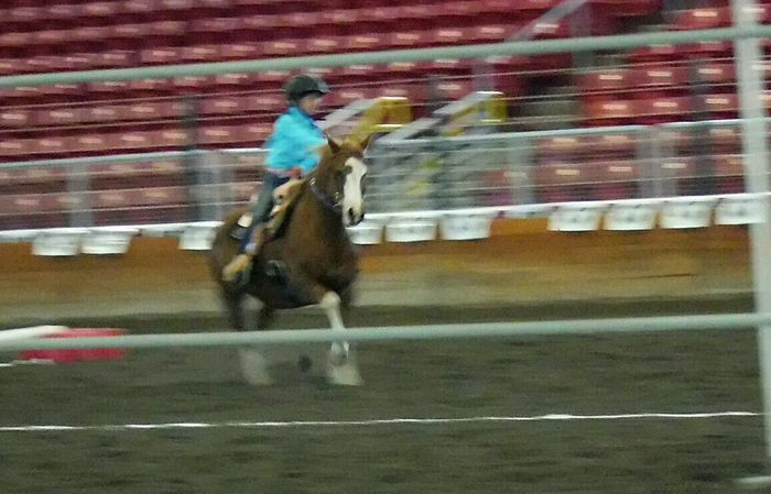 Eyeemphoto Two Is Better Than One Taking Photos The Magic Mission Colour Of Life Fresh On Eyeem  Best Of EyeEm Horse Riding Rodeo Scene Horse Jumping Competition Girl Power People And Places Washington State Fairground State Fair Hello World