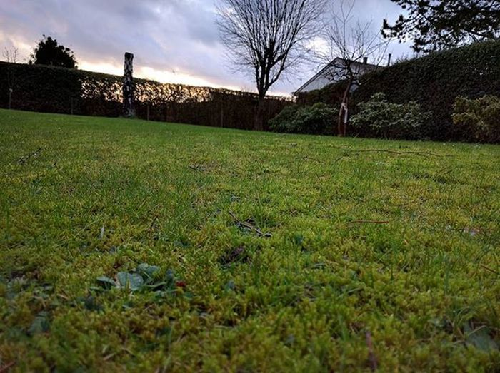 Green grass in December. Huawei Nexus6P HDR Nofilter Noflash Nofocus  December Wintertime Nosnow Climatechange Greengrass Sky Clouds Sun Tree Backgroud Frontfocus Sunshine Sunlight