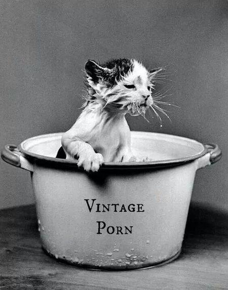 Hello World Cat Enjoying Life