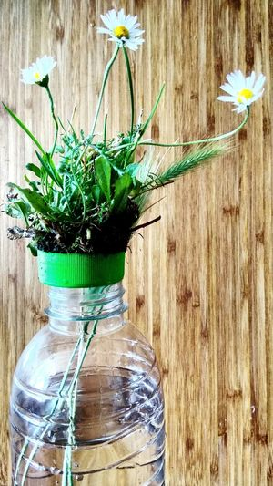 Four concepts of plastic... (3/4) Daisy Flower Daisy Daisys Plastic Green Cap Wood Wood - Material Grass Flower Wood - Material Close-up Plant Wooden Flower Head Plant Life Single Flower Botany Plastic Environment - LIMEX IMAGINE