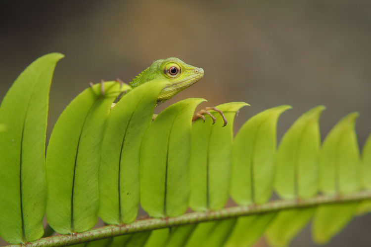 Close-up Green Color Leaf Lizard Nature Outdoors First Eyeem Photo