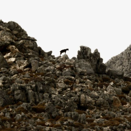 Natural explorations Animal Themes Bird Animal Wildlife Animals In The Wild Animal Rock Sky Vertebrate Rock - Object One Animal Solid Clear Sky No People Nature Low Angle View Copy Space Perching Outdoors Day Rock Formation