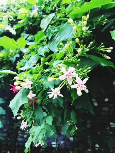Blooming after the rain The Power Of Flowers Plant Growth Flower Flowering Plant Plant Part Beauty In Nature Leaf Green Color Freshness Day Nature Outdoors
