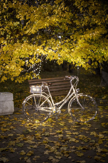 Bicycle parked in autumn leaves