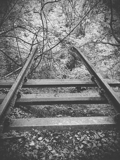 Blackandwhitephotography Traintrack Forest Old Broken