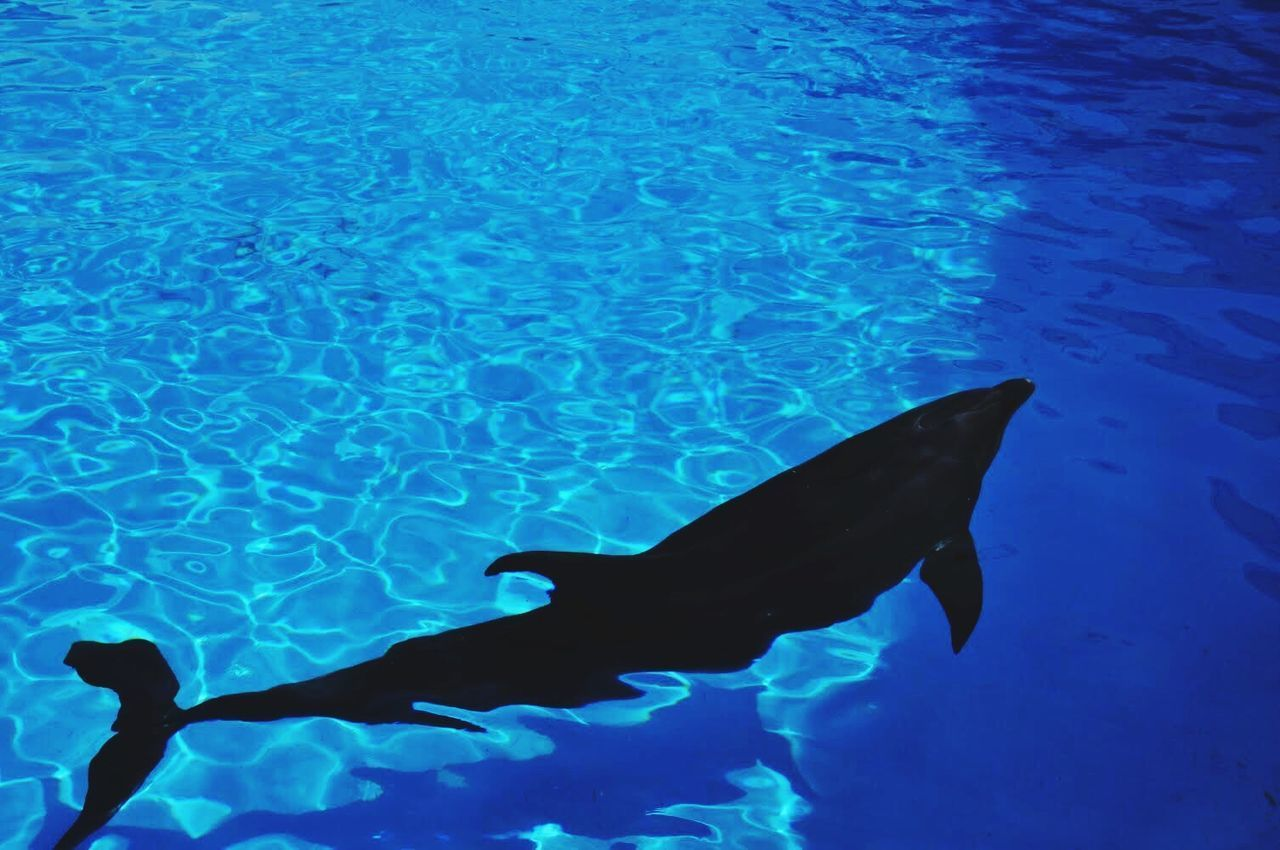 water, animal themes, fish, swimming, sea life, animals in the wild, blue, underwater, nature, no people, aquarium, day, outdoors, undersea, close-up, mammal