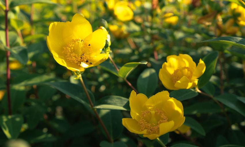 Close-up Flower Flower Head Flowering Plant Fujifilm Growth Leaf Petal Plant Summer Yellow
