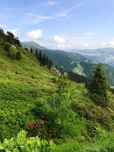 Mountain Range Alps Mountain Nature Growth Landscape Beauty In Nature Grass Sky No People Outdoors Day