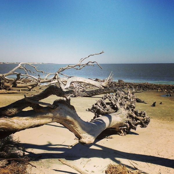 The KIOMI Collection Jekyll Island's Driftwood Beach Beach Driftwood Georgia Jekyll Island