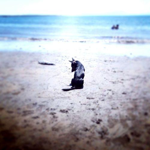 Playa Caldera CR, Modelo Blakie