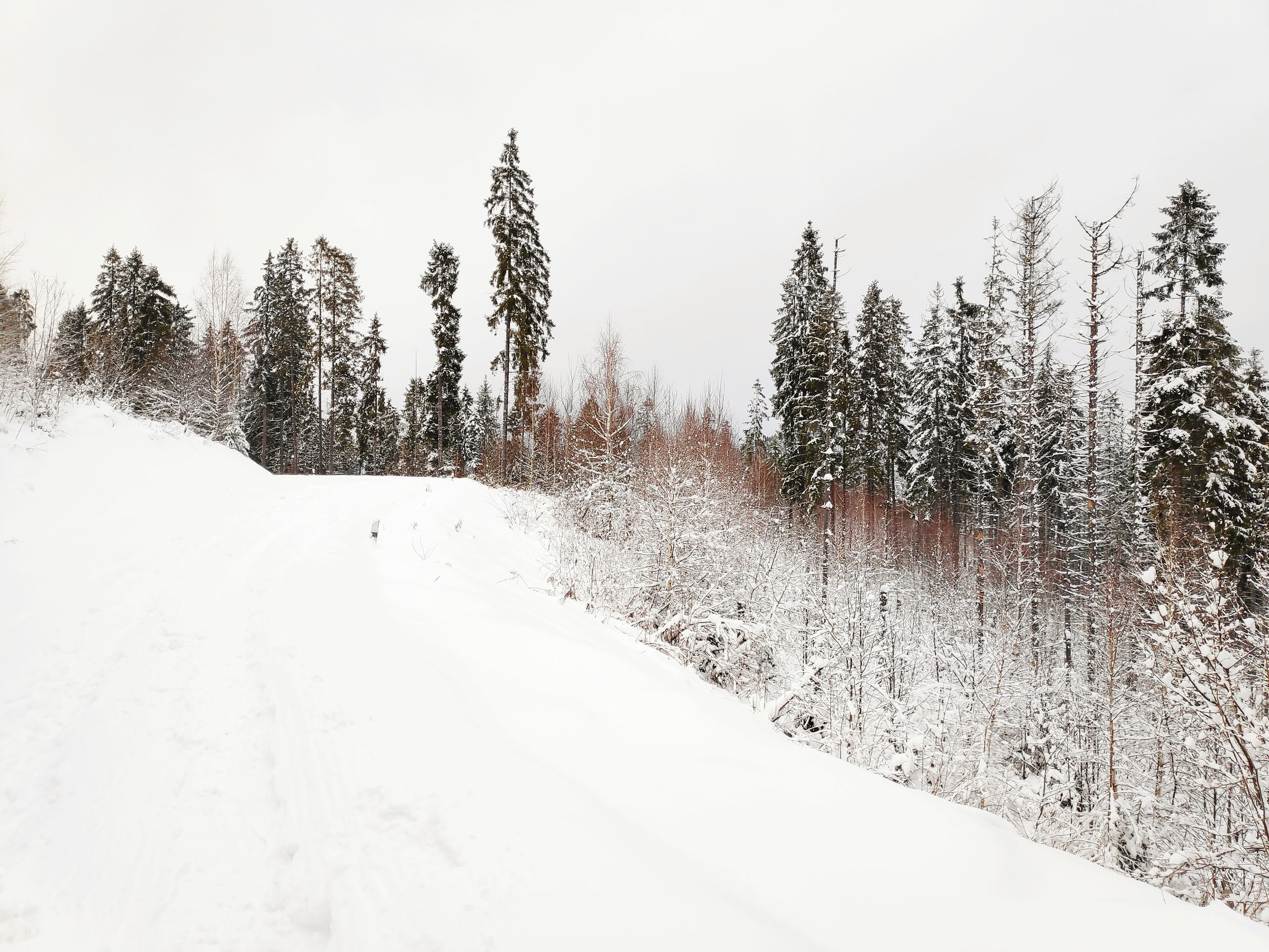 snow, cold temperature, winter, plant, tree, white color, beauty in nature, tranquility, tranquil scene, covering, nature, land, scenics - nature, sky, non-urban scene, no people, day, growth, forest, snowing