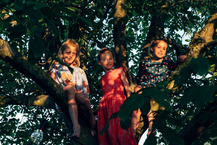 Three child sisters sitting on the branches of tree on a late summer day - friendship and childhood