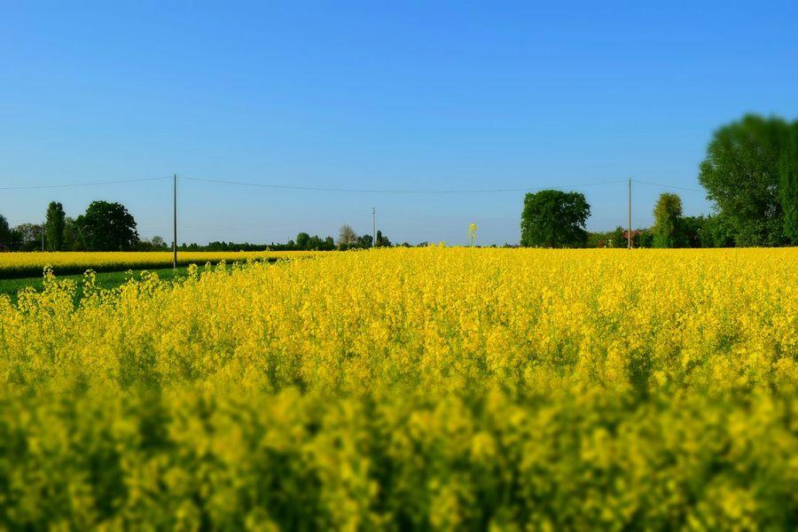 Spring Into Spring Lemon By Motorola