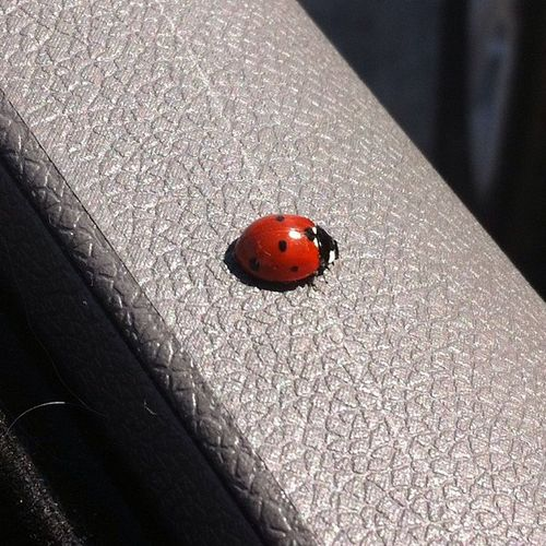 Lady Luck has arrived! Ladybug Ladybugluck Lucky Deceptively Simple Nofilter Noedit Nofilter#noedit NoEditNoFilter