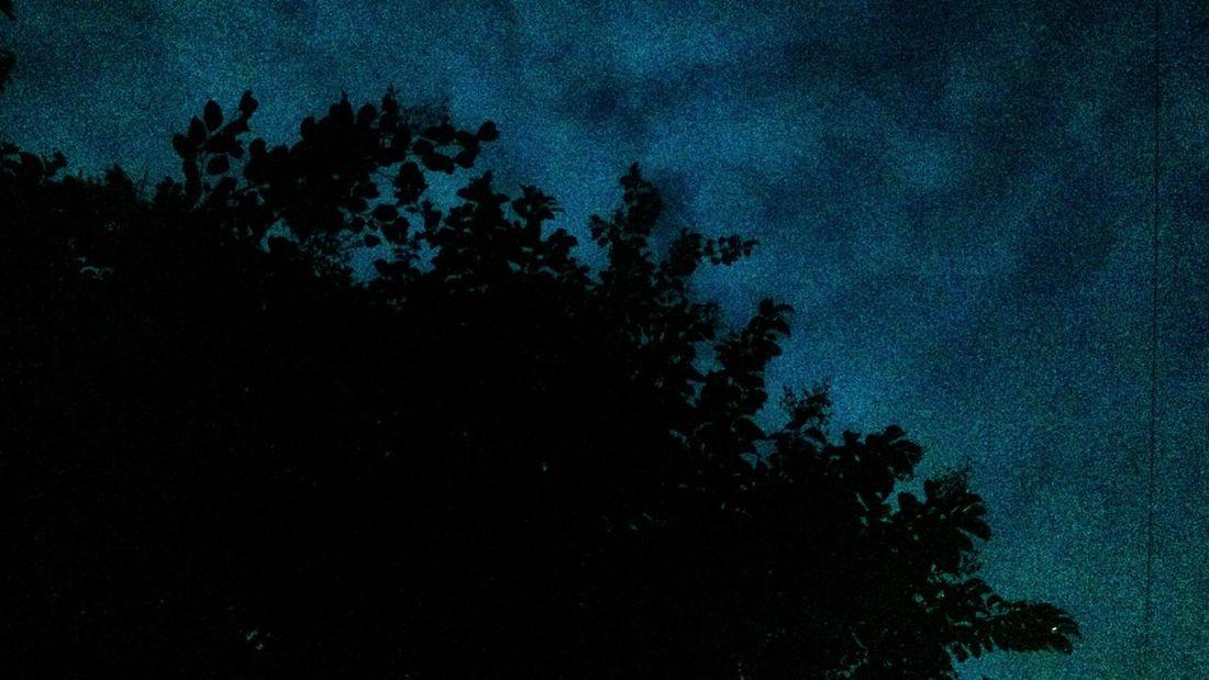 Tree Night Dark Sky Nature because the night is dark and have light