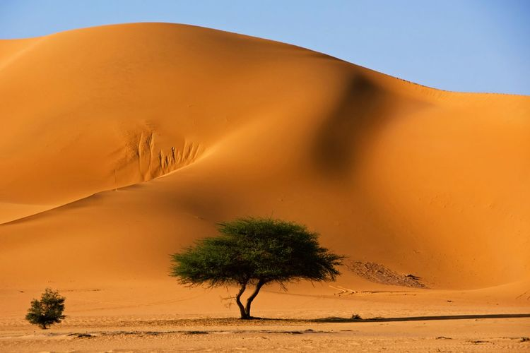 Arid Climate Beauty In Nature Climate Desert Environment Land Landscape Nature No People Non-urban Scene Outdoors Plant Remote Sand Sand Dune Scenics - Nature Sky Tranquil Scene Tranquility Tree