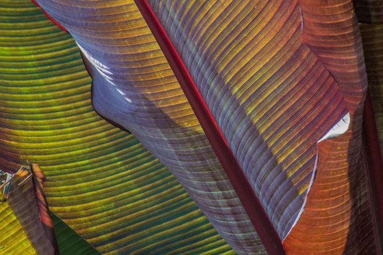 Veins In Leaves Abundance Arrangement Backgrounds Close-up Day Design Full Frame In A Row Large Group Of Objects Leaf Leaves Low Angle View Multi Colored Natural Pattern No People Outdoors Pattern Still Life Striped Textile Textured