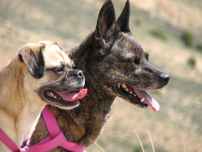 Dog Portrait Pair Look EyeEm Best Shots Animal Photography Animal Lover Wyoming View Point