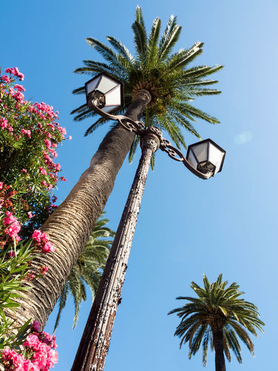 Street Lamp Clear Sky Day Growth Low Angle View Nature No People Palm Tree Sky Tree Tree Trunk