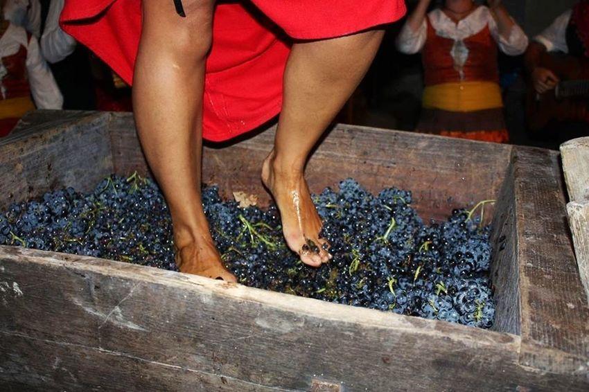 Urban 4 Filter Pigiatura Vino Wine Uva Tina E Baiardo Aglianico Aglianico Del Vulture