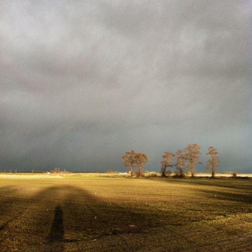 Kutschwetter im November. Kutsche Kutschfahrt Backemoor Ostfriesland Pony