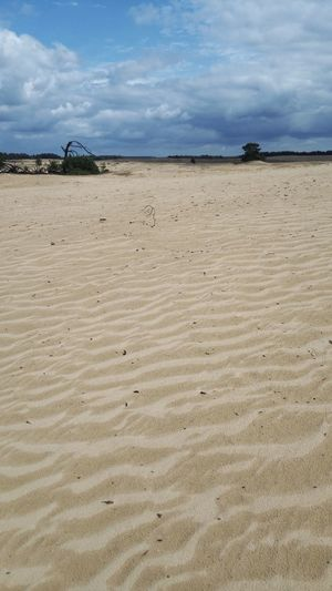 Hogeveluwe Hoge Veluwe Dunes Dunescape Desert Dunes Of Holland Sand Landscape Landscape_photography Landscape_Collection Landscapes Sand Dune