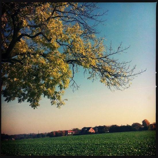 #brandenburg #unterwegs #landliebe #landschaft #landlust #germany #herbst #ausflug